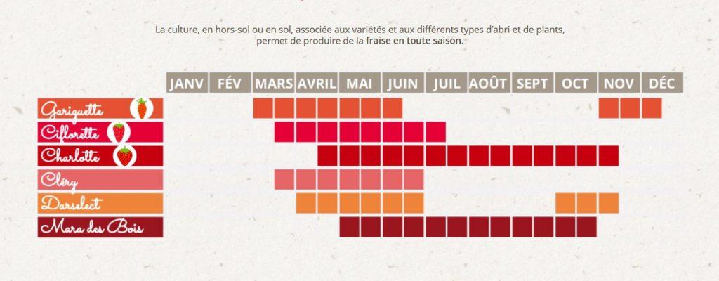 calendrier production fraise réalisé par Fraise Label Rouge