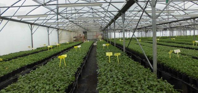 chauffer jeunes plants en serre