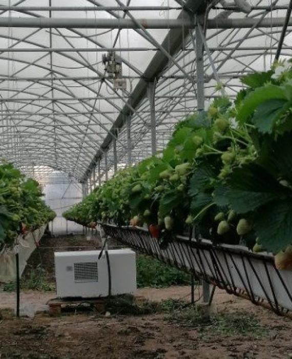 Le déshumidificateur thermodynamique : un allié pour lutter contre le champignon Botrytis sur vos fraises