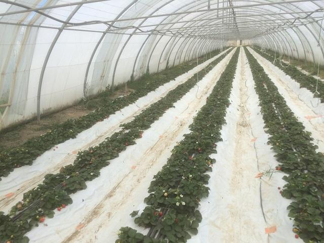 chauffage fraise en sol basse température