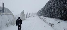 Protéger vos cultures du froid : quelques conseils pour les producteurs