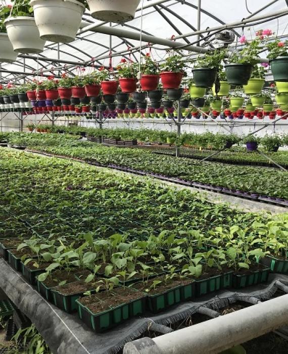 Quel type de substrat choisir pour ses semis?