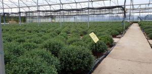 arbuste en serre